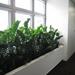 Pflanzen für Innenräume